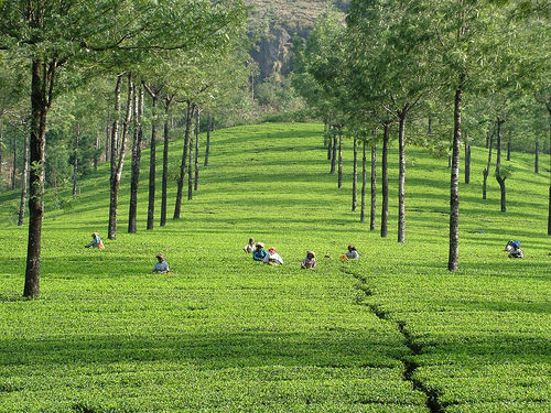 North and south India cultural Tour – 23 days at $ 1600 by Go Blend Travels Inc
