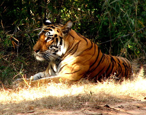 Jungle Book 14 Days Tour at $8300 By Worldwide Adventures