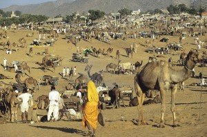 Pushkar Fair Tour 2012 14 Days Tour By Erco Travels Pvt