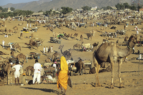 Pushkar Fair Tour 2012 14 Days Tour By Erco Travels Pvt Ltd