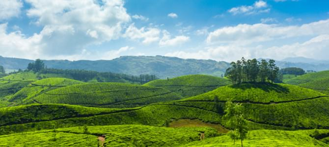 Romantic Kerala Tour 6 Days Package By Indian Holidays