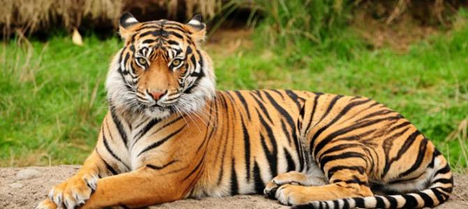 Wildlife Tour Of India15 Days Package By Indian Holidays
