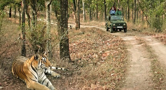 Central India Tigers &  Taj Tour 9 Days Package By India Tour Online