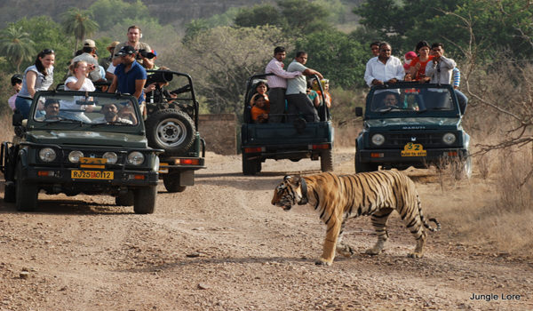 Ranthambore National Park3