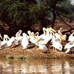 Bharatpur Bird Sanctuary