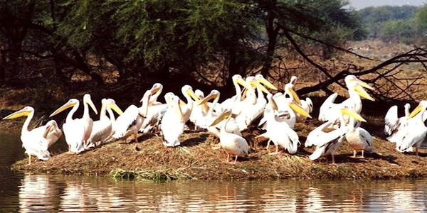 Golden Triangle Tour with Wildlife of India 10 Days Package By Tour My India
