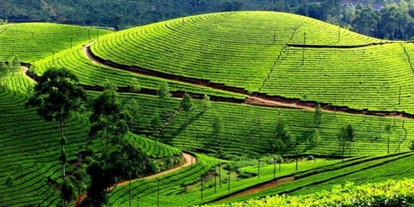 Hills Of Ooty Kodaikanal & Munnar Tour 7 Days Package By Make My Trip