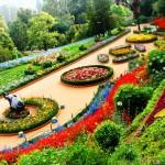 Botanical-Garden-ooty (1)
