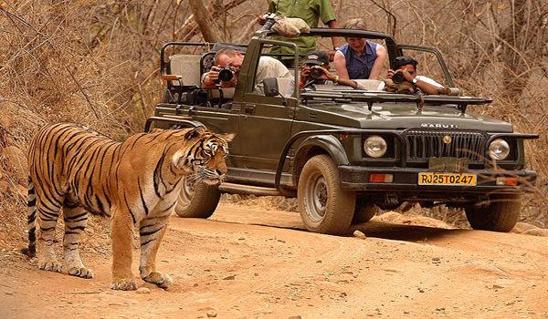 Ranthambore National Park2